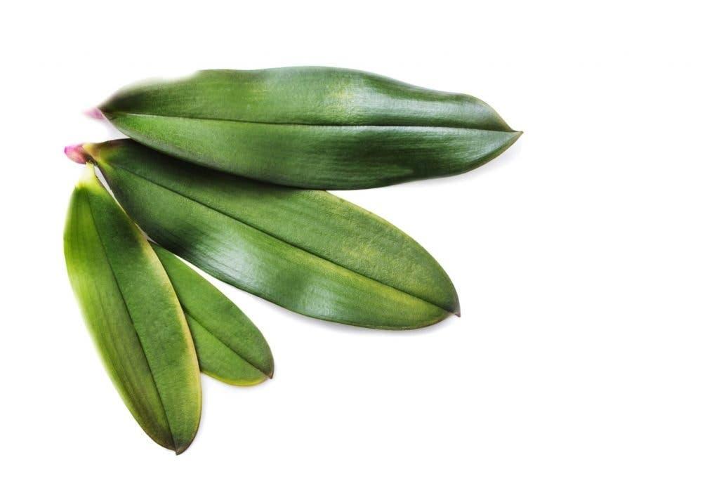feuillesorchidees