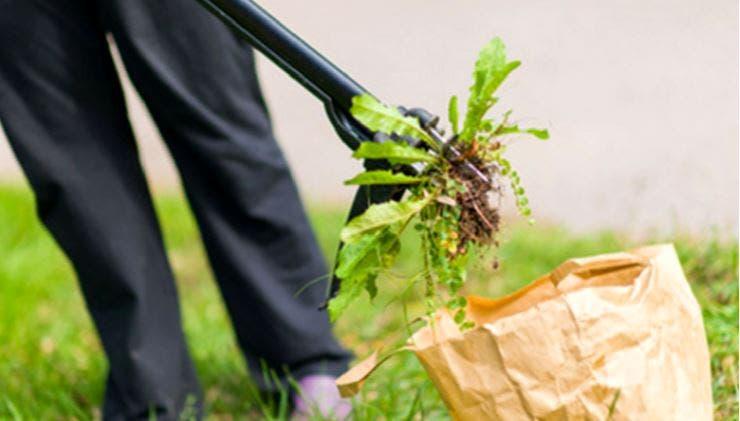 herbicidemecanique