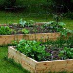Erhöhter Garten: So bauen Sie ihn in 6 einfachen Schritten