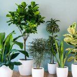 6 Pflanzen, die böse Geister und böse Energien aus dem Haus vertreiben