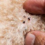Wie kann ich Flöhe von meinem Hund loswerden, ohne seine Haut oder sein Fell zu schädigen?